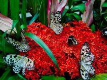 Ngất ngây trước vẻ đẹp của Công viên bướm và Vương quốc côn trùng tại Singapore