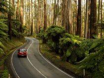 Du lịch khám phá dãy núi Dandenong tuyệt đẹp tại nước Úc